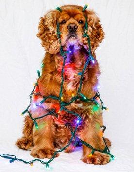 Holiday Decorating with Dawn Rosenmayr